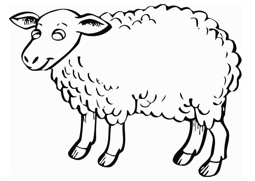 Sheep face coloring