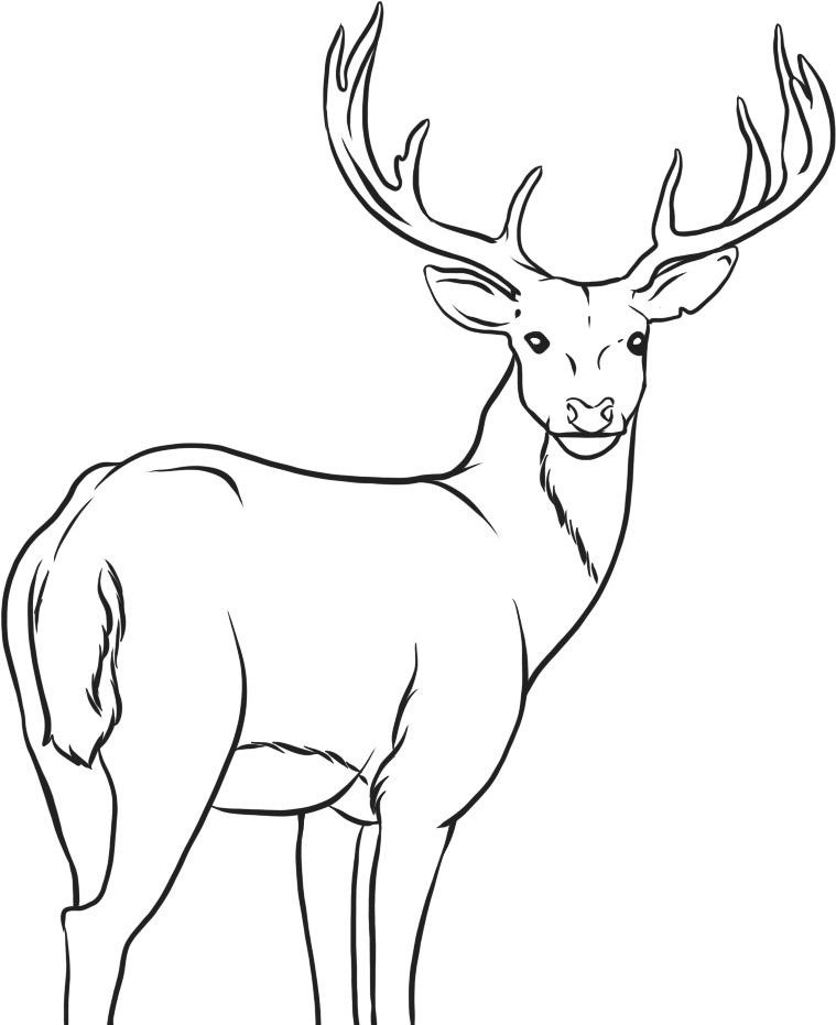 coloring pages and deer - photo#7
