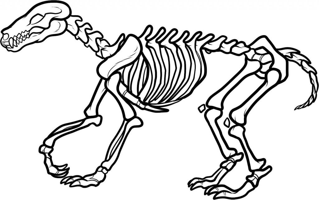 ausmalbilder dinosaurier skelett  tippsvorlage