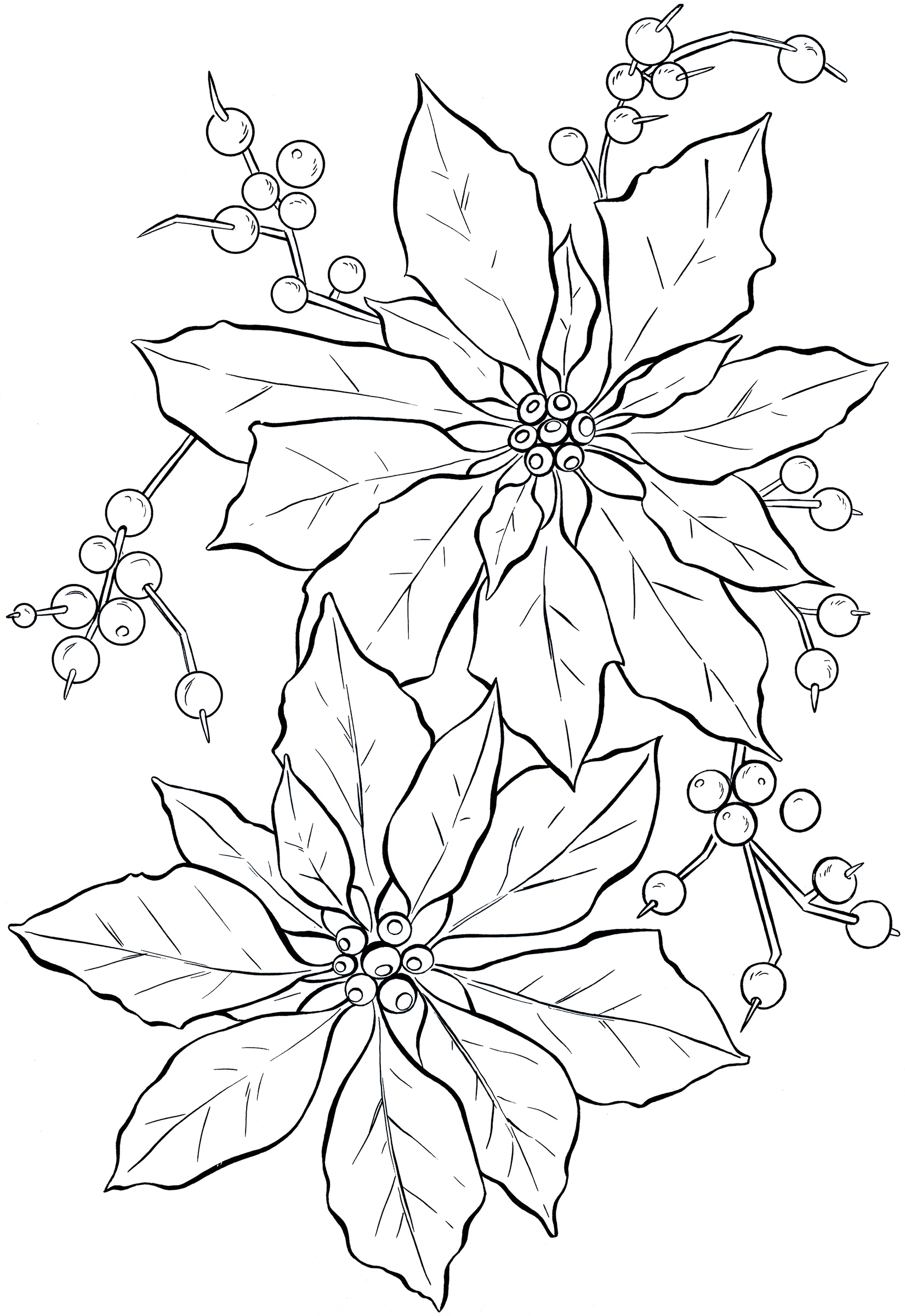 Red Flower Line Drawing : Free printable poinsettia coloring pages for kids
