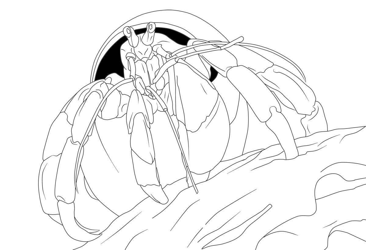Simple crab coloring pages - animalcarecollege.info