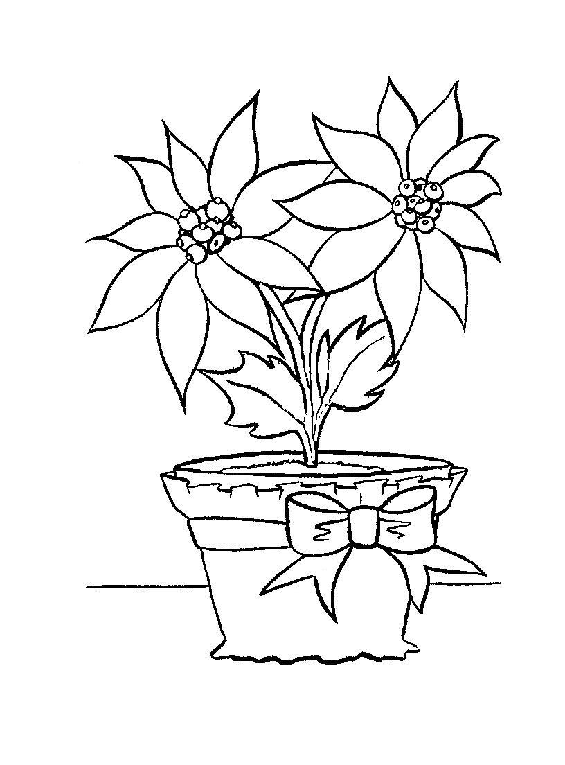pointsettas coloring pages - photo#5