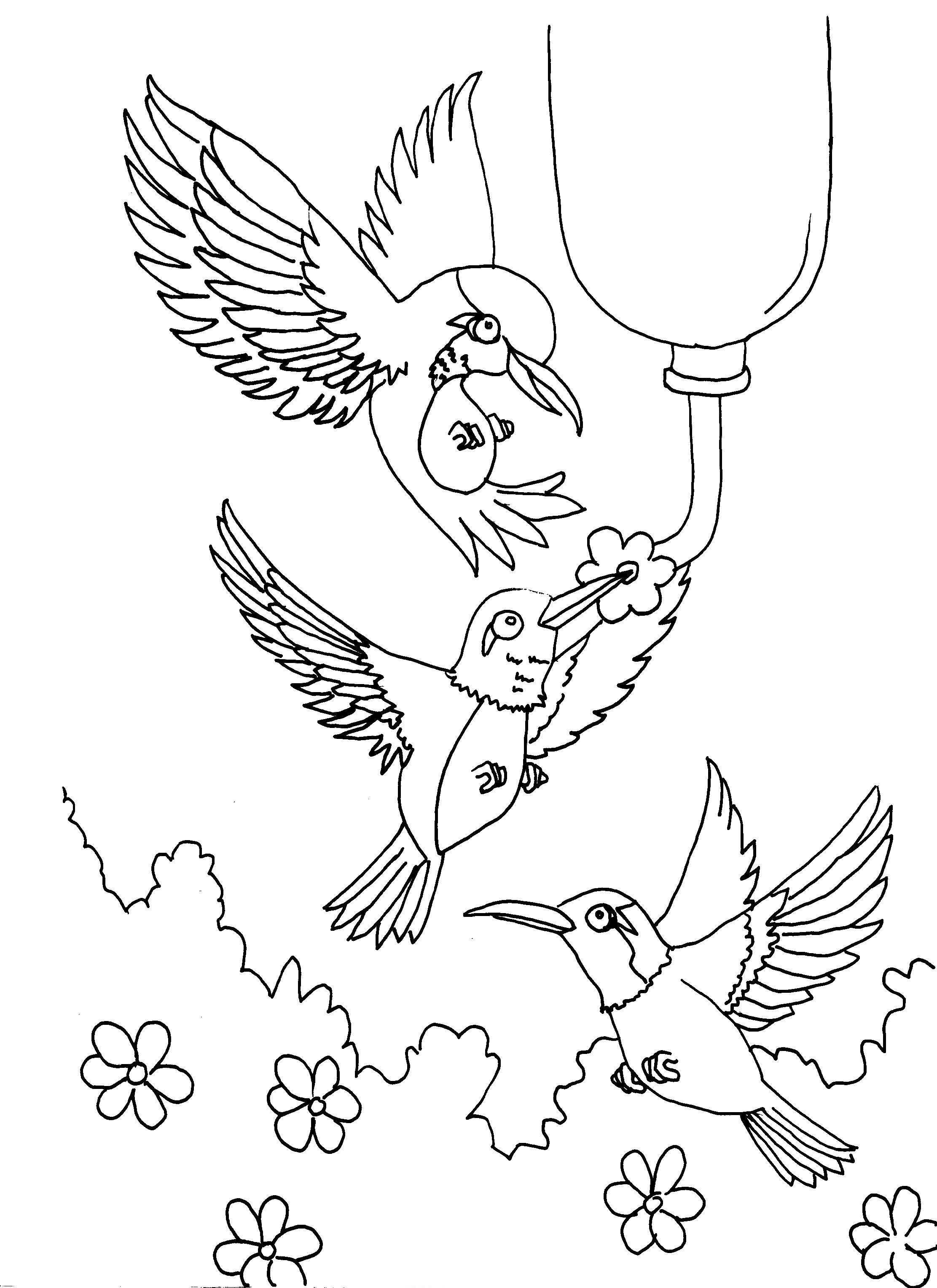 Free Printable Hummingbird Coloring