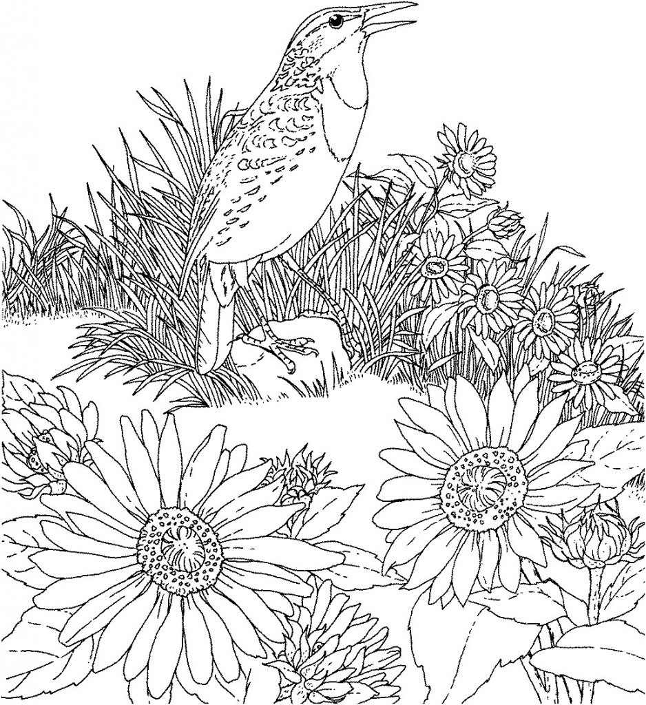 State Flowers Coloring further 72936 bee flower likewise 2023845 additionally  besides Montana 20clipart. on bitterroot drawing