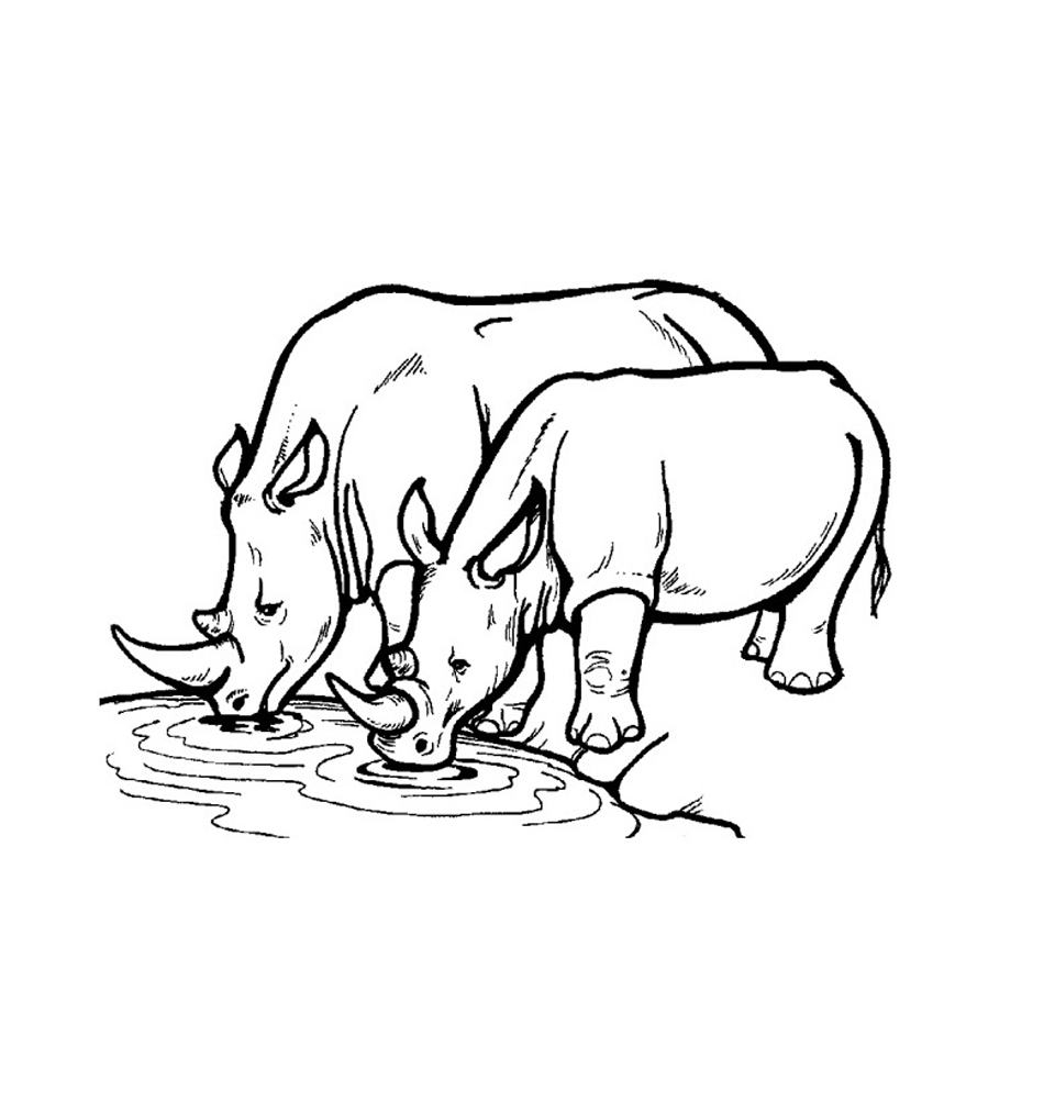 How To Draw A Rhinoceros  Art For Kids Hub