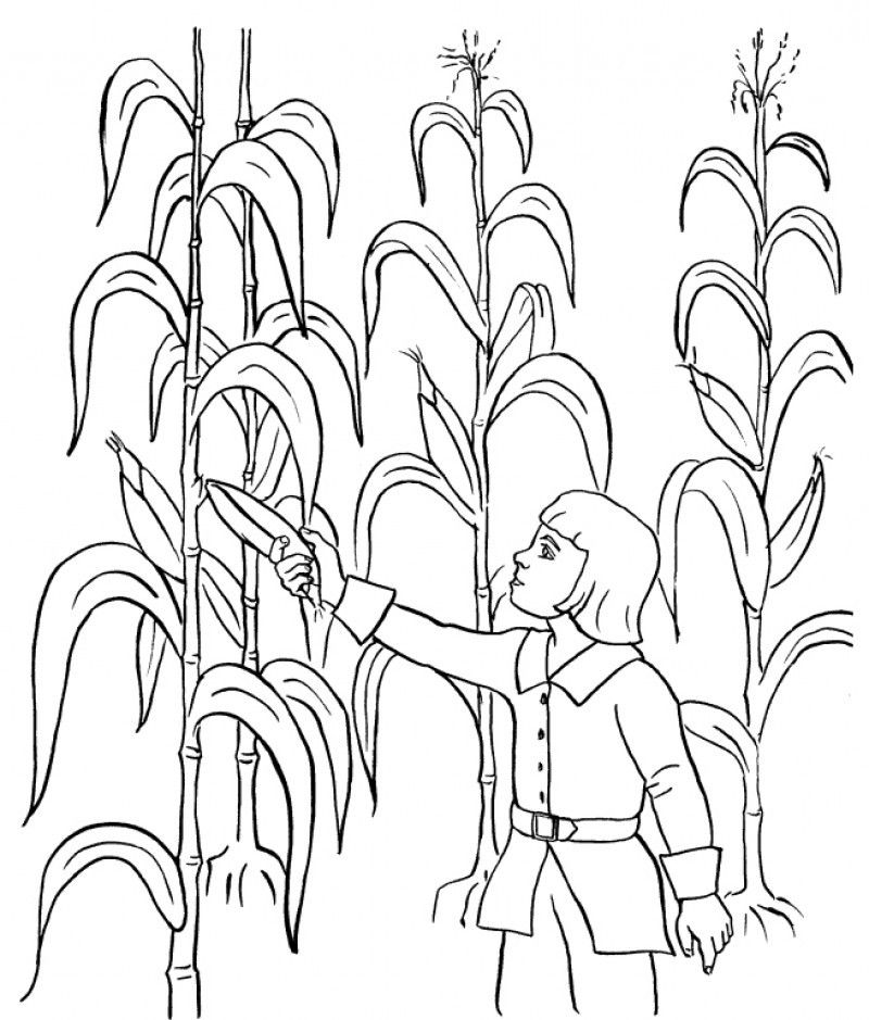 Harvest Coloring Pages Best Coloring