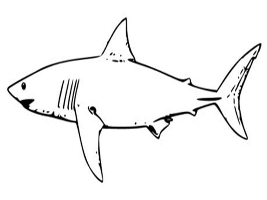 It's just a graphic of Sassy shark coloring sheet