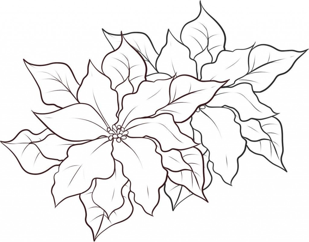 It is a graphic of Modest Poinsetta Coloring Page